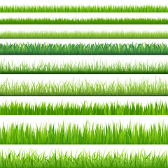 Big Set Grasses