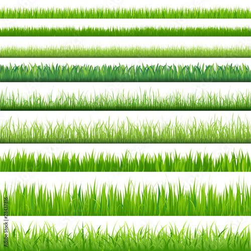 Big Set Grasses