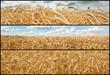 Banners - Wheat