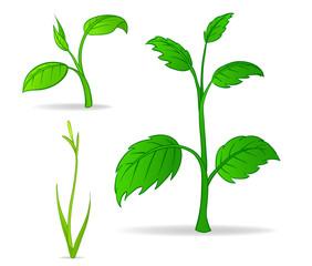 Vector set of green cartoon plants