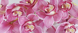 Orchideen, Cymbidium