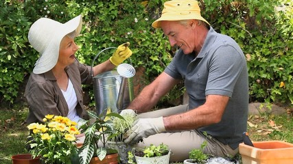 Old couple gardening together