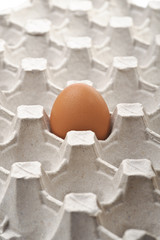 One lonely fresh egg in the empty egg-holder