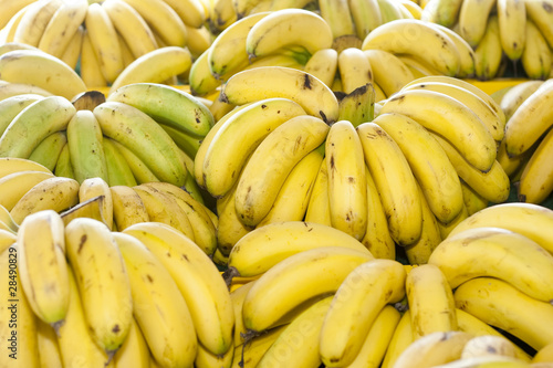 A Bunch of Tropical Malaysia Bananas Group Together