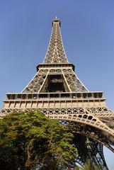 Tour Eiffel de Paris avec un arbre