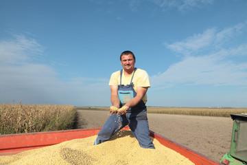 Soy bean harvesting