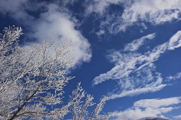 Alberi dopo una nevicata, Castelluccio
