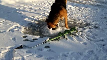 Dog on winter fishing 1.