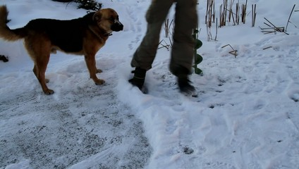 Dog on winter fishing.