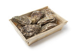 Fresh raw oysters in a box