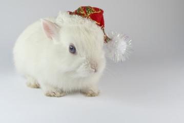 christmas white rabbit