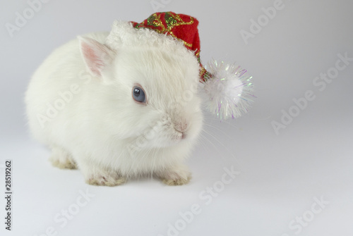 christmas white rabbit