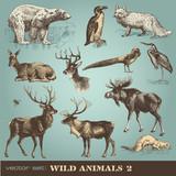vector set: wild animals 2