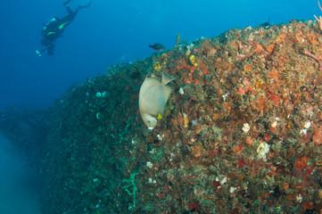 Shipwreck Artificial Reef