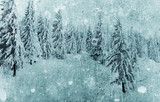 Grunge Christmas card with snowy firs