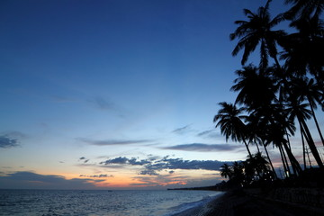 Tropical Paradise Silhouette