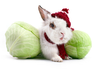 White fancy rabbit in knitted cap and scarf with cabbage