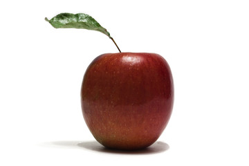 Red Apple with Stem