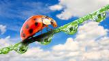 Early morning ladybug on fresh dewy grass.