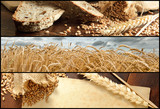 Fototapety Banners - Wheat and Bread