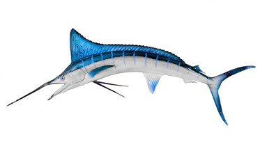 Swordfish Isolated with Clipping Path