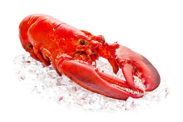 lobster  on Ice isolated on a white background