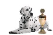Dalmatiner Hund mit Pokal