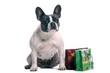 Französische Bulldogge mit Tasche