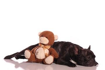 Hund Französische Bulldogge krank