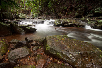 rainforest with cascading water of the creek
