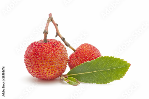 arbutus on white background