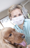 Lady veterinary with dog poster