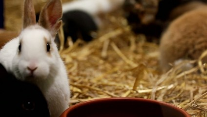 Kaninchen sind süß, nicht nur zu Ostern