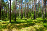 Fototapety Summer forest