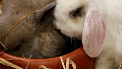 Kaninchen an der Futterschale
