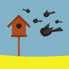 Birds and Bird box