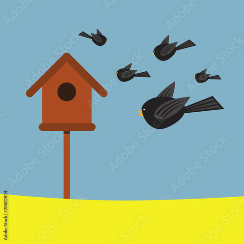 Birds and Bird box
