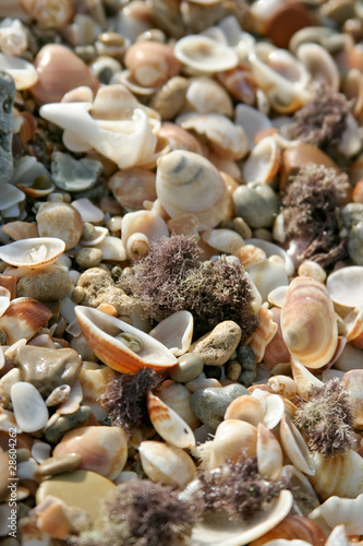 Marine shells background