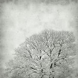 textured old paper background with decidous tree covered in snow poster