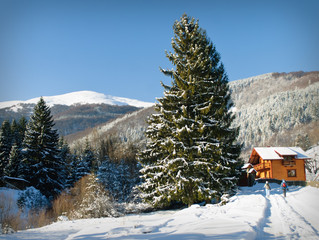 Winter house in fir-tree forest