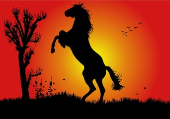 caballo salto