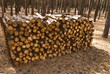 heap of pine logs in a forest