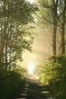 Dirt road in deciduous forest on a misty spring morning