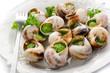 bourguignonne snail- lumache alla bourguignonne - 28640672