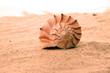 Muschel Gehäuse