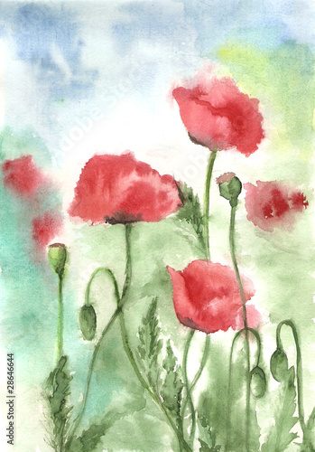 Watercolors of red poppies