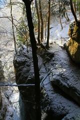 Lumière d'hiver en forêt