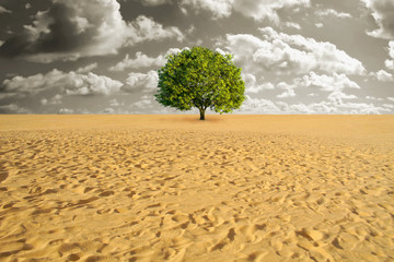 Tree alone in desert
