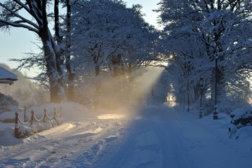 rays of sunlight through snow covered trees
