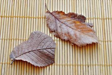 Hojas y bambu